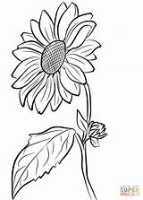 Coloring Sunflower Pages Supercoloring Printable Drawing sketch template