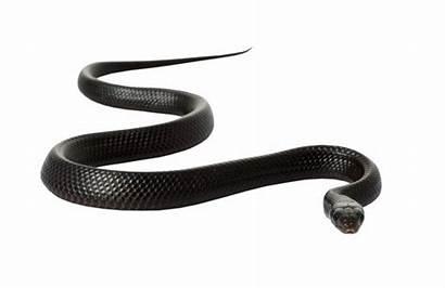 Mamba Snake Format