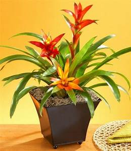 32 best Air purifying plants images on Pinterest