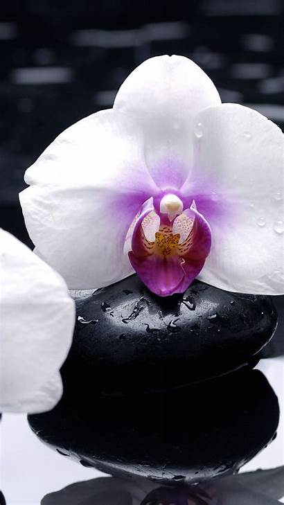 Orchid Iphone Wallpapers Flower Wallpaperboat 1080 1920