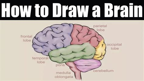 How To Draw Brain Diagram Easily Defended