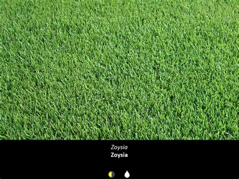 what type of grass is sod sod varieties john madison landscape