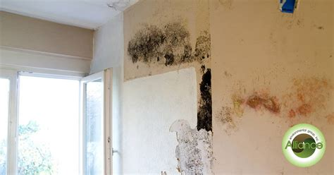 mold remediation services  los angeles ca mold
