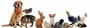 Wohnung Vermieten Was Muss Man Beachten : mietwohnung tiere zu besuch was muss man beachten ~ Yasmunasinghe.com Haus und Dekorationen