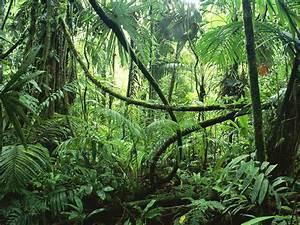 What is a Rainforest? | Class BB's Blog