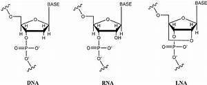Chemical Structure Of Dna  Rna And Lna