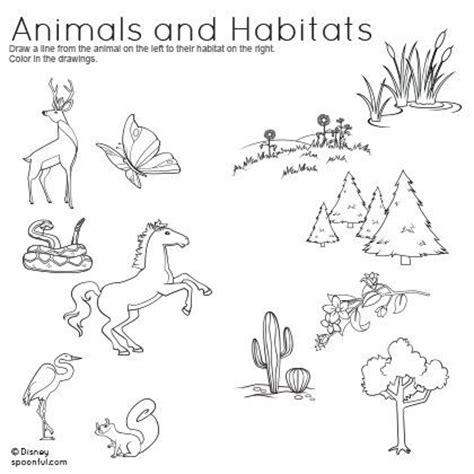 free animal habitat worksheets for 2nd grade animals and habitats matching worksheet science