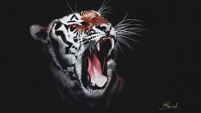 Tiger 4k Roaring Wallpapers Tigers Animals