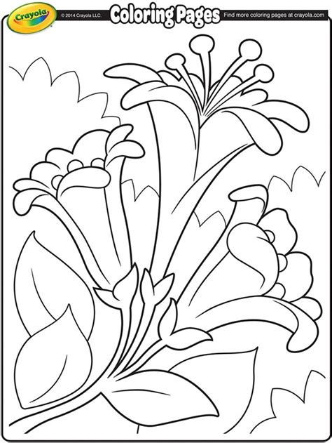 easter lilies ii coloring page crayolacom