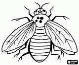 Mosca Mouche Mucha Colorir Owad Coloriage Colorear Malvorlagen Insectos Imprimir Vlieg Insecto Kolorowanki Coloring Insekten Owady Colorare Insecten Fly Vleugels sketch template