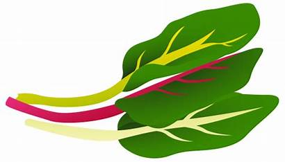 Chard Clipart Swiss Vegetables Nutrition Clipground Foodandhealth