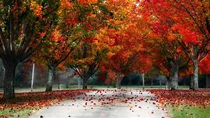Fall Trees Wallpaper ·①