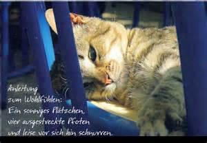 sprüche für trauer gb bilder katzenbilder mit text