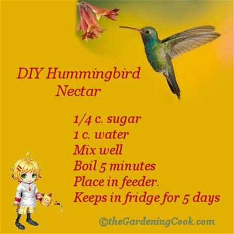 25 best ideas about hummingbird food on pinterest