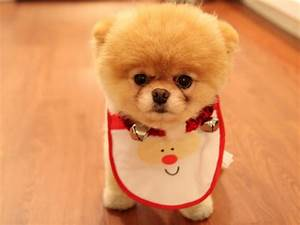 Cute Dog Christmas Wallpapers | HD Wallpapers | ID #11967