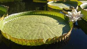 In Taipei You Can Float On Giant Water Lilies