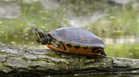 aquatic turtle basking light turtle basking platform buyer 39 s guide exotic petquarters