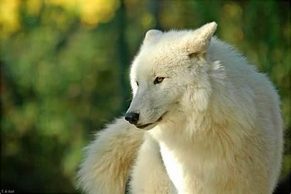 Wolf Weisser Augen Kapitel Gruppendiskussion Vampir Rpg