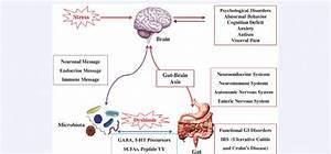 Bidirectional Communications Between Gut