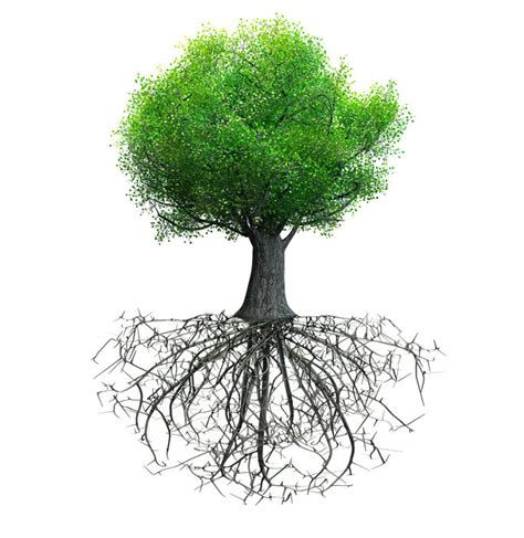 tree trunk and roots template execunet what you stand for building a team philosophy