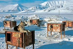 arctic dog houses gagdaily news With in ground dog house