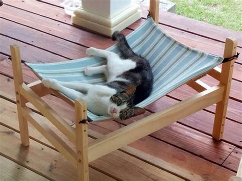 Cat In Hammock by How To Make A Cat Hammock Your Projects Obn