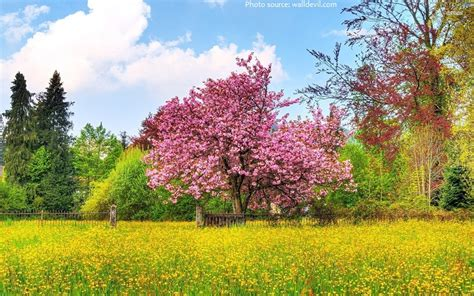 facts about magnolia trees interesting facts about magnolia just fun facts