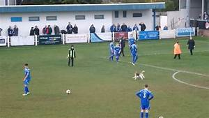 Dog invades pitch and eludes capture in seven minute spree ...
