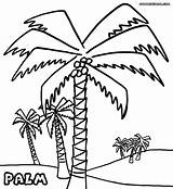 Palm Coloring Tree Pages Colouring Trees Beach Drawing Tahiti Pretty Template Sheet Vietti Colorings Getdrawings Sketch Birijus Popular sketch template