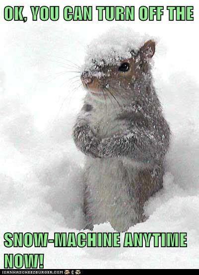 Snow Memes Funny - animal snow meme jpg funny pinterest snow funny animal and memes