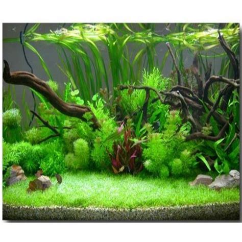 manufacturer exporter of fish aquariums decorative aquariums by boyu redlin aquarium chennai