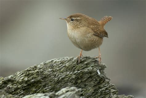 is the number of birds declining bird population the rspb