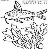 Catfish Coloring Pages Animal sketch template