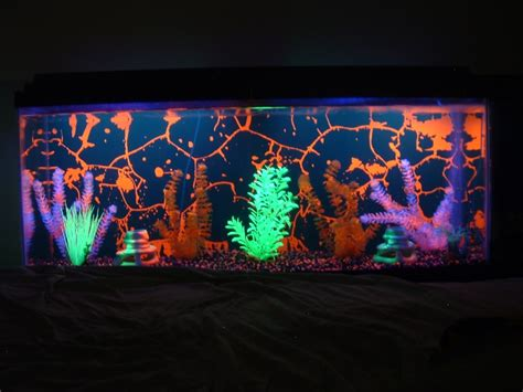 black light aquarium glofish electric green tetra page 4 the planted tank
