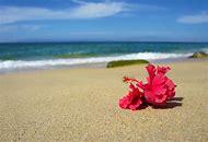 Tropical Flowers On Beach
