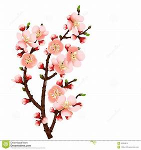 Cherry Blossom Branch Abstract Background Stock Vector