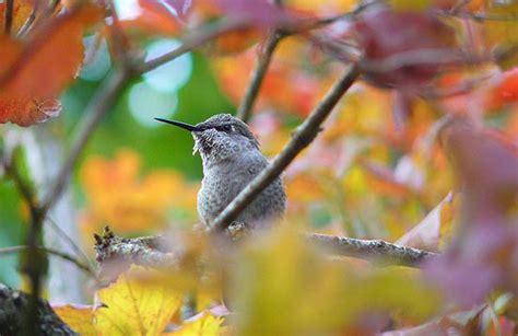 plant groups birding basics