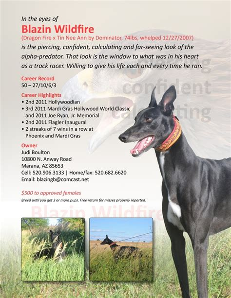greyhound inside blazin longer ad