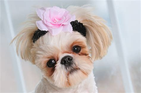 10 สุนัขพันธุ์เล็กที่คนนิยมเลี้ยง - สุนัขพันธุ์ต่างๆ