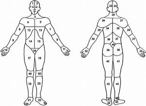 Body Map Head  Area 1  2  23  Or 24   Neck  Area 3 Or 2