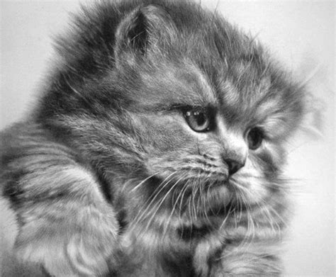 Best 25+ Drawings Of Cats Ideas On Pinterest