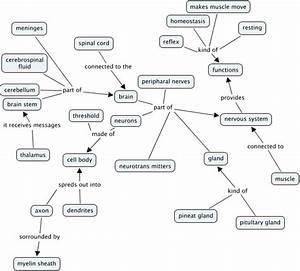 Tx nervous system concept map