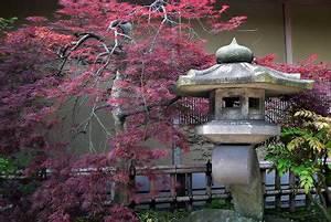 Japanische Pflanzen Winterhart : pflanzen fur japanischen garten m belideen ~ Michelbontemps.com Haus und Dekorationen