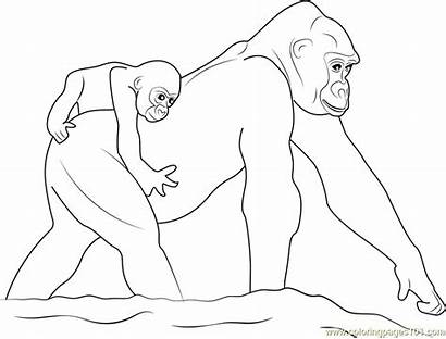 Gorilla Coloring Pages Printable Coloringpages101 Getcolorings