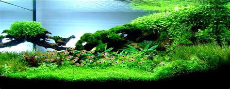 nature aquarium aquascaping planted aquariums aqua design