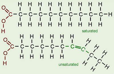 chemistry  fat