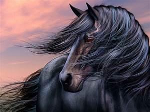 Beautiful Wallpapers: Black Horse Wallpapers