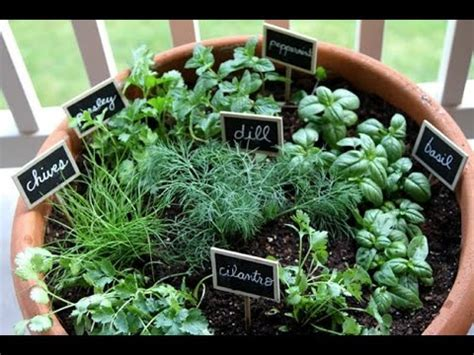 Growing Herbs Inside by How To Grow Herbs Indoors