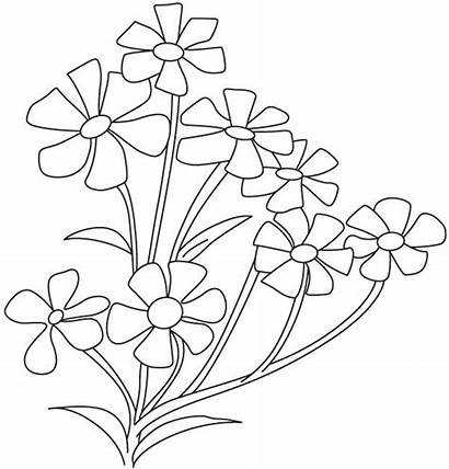 Coloring Flower Pages Breath Jasmine Plant Periwinkle
