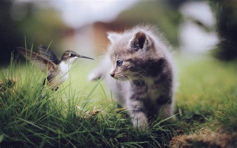 Hummingbirds, Birds, Nature, Cat, Kittens, Baby Animals